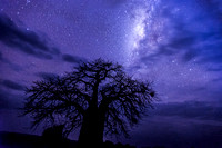 Baobab and the Milky Way